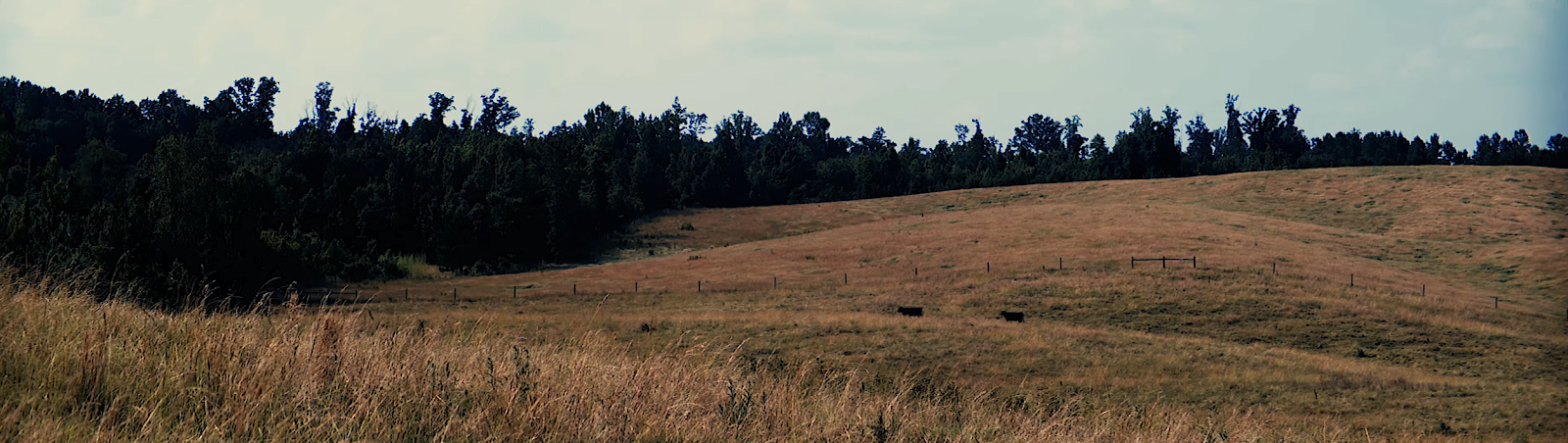 Wide frame image of golden grassy hill